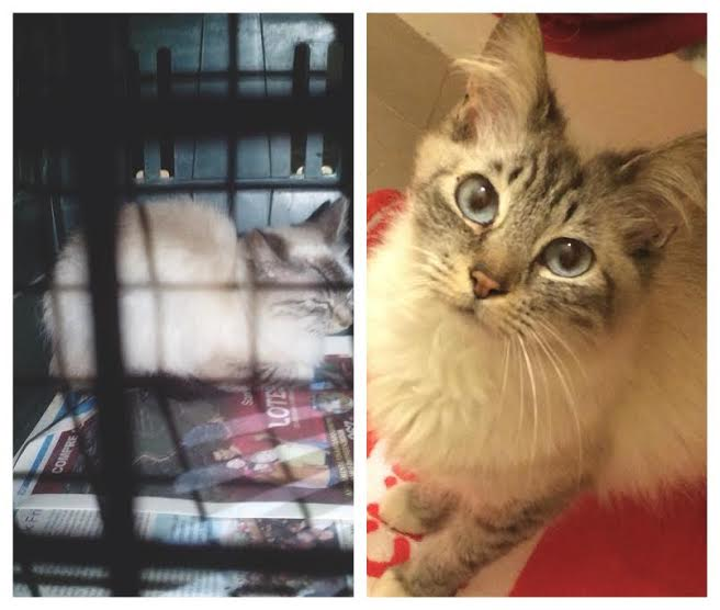 Antes e depois Khaleesi